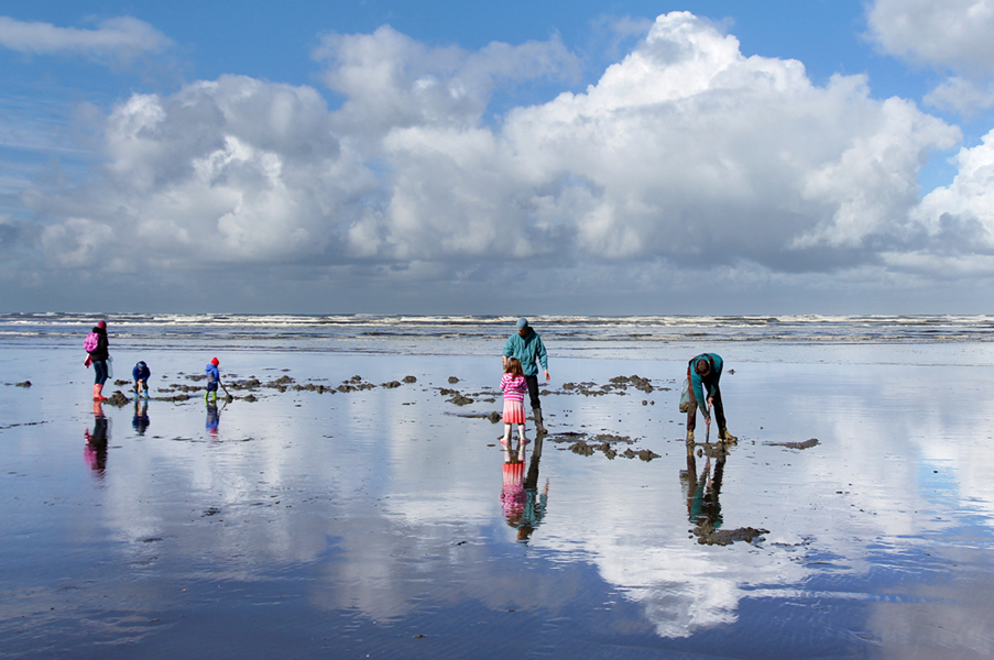 people digging for clams on a beach with clouds reflected in the wet sand